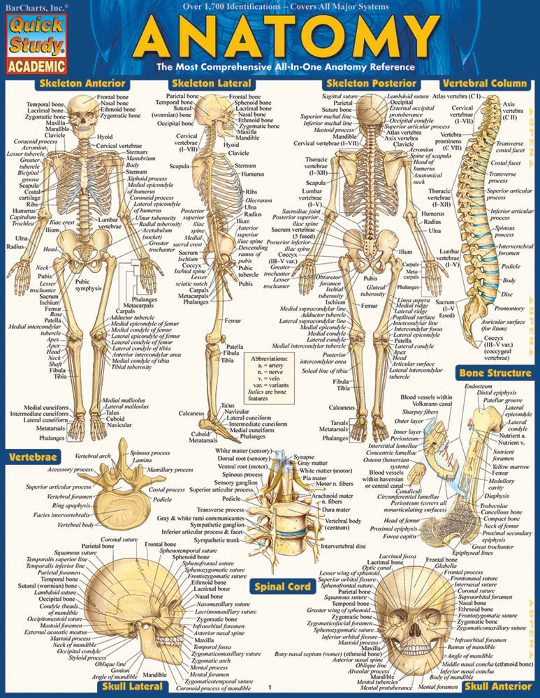 Image For BARCHARTS ANATOMY