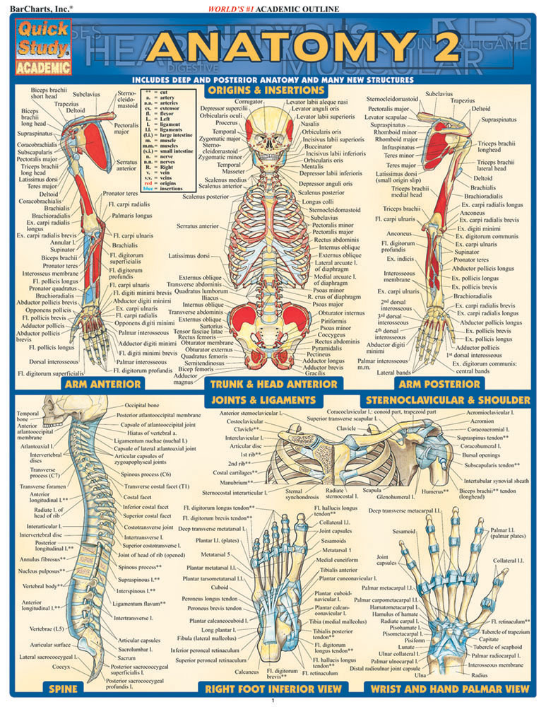 Image For BARCHARTS ANATOMY 2